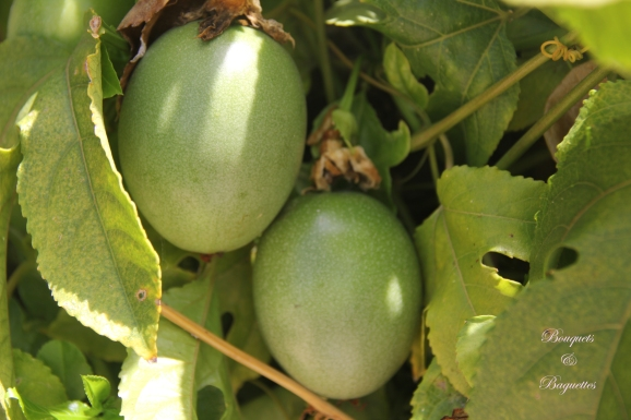 Passionfruit on the Vine